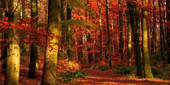 Bosques-italiantraditions